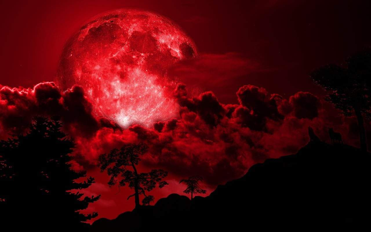 blood-moon-dark-forest-wallpaper-dark-forest-wallpapers-926271813